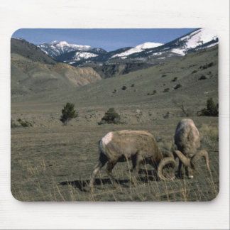 Two Bighorn Sheep Rams Mouse Pad