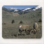 Two Bighorn Sheep Rams Mousepads