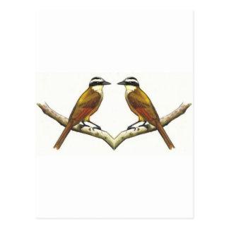 Two Birds Facing: Kiskadees in Color Pencil Postcard