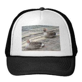 Two Birds Mesh Hat