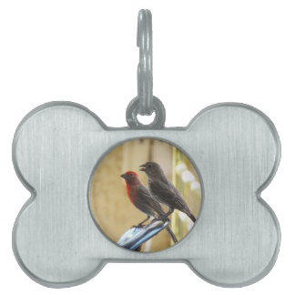 Two birds One looks like he's talking Pet Name Tag