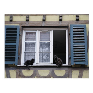 Two Black Cats at Window Post Card