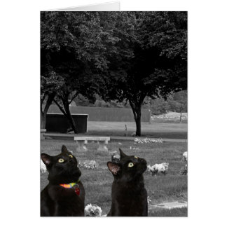 Two Black Cats in Cemetery Blank Greeting Card