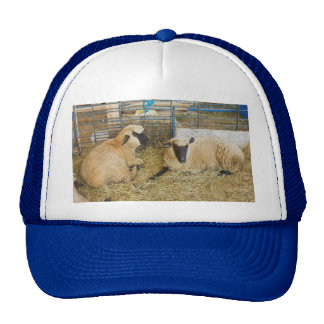 Two Black Faced Sheep In A Barn Trucker Hat