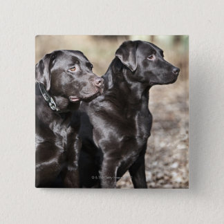Two Black Labrador retrievers Button