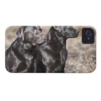 Two Black Labrador retrievers Case-Mate iPhone 4 Cases
