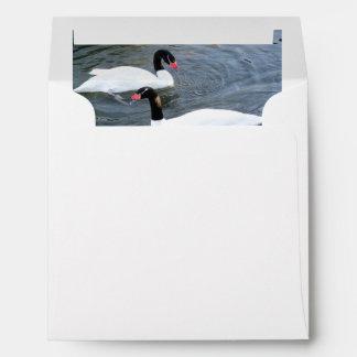 Two Black-Necked Swans Swim In Opposite Direction Envelopes