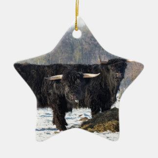 Two black scottish highlanders in winter snow ceramic ornament