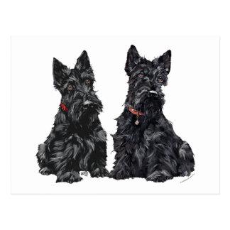 Two Black Scottish Terriers Postcard