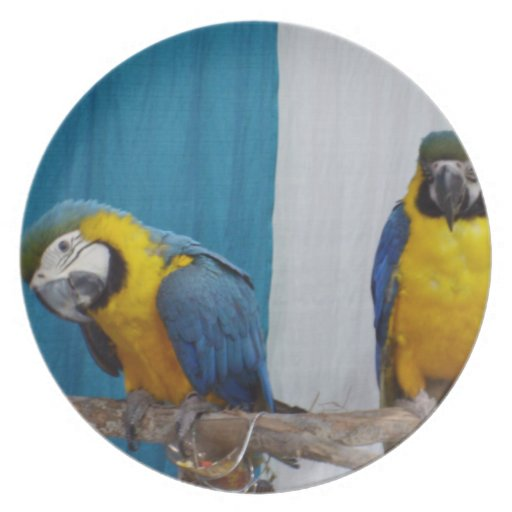 Two Blue and Gold Macaws Dinner Plate