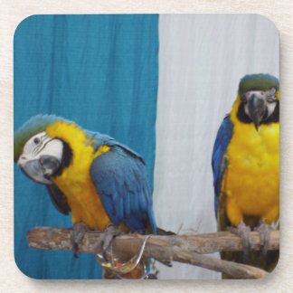Two Blue and Gold Macaws Drink Coaster