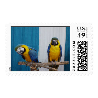 Two Blue and Gold Macaws Postage Stamp