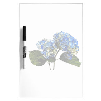 Two Blue Hydrangea With Leaves Dry Erase Board