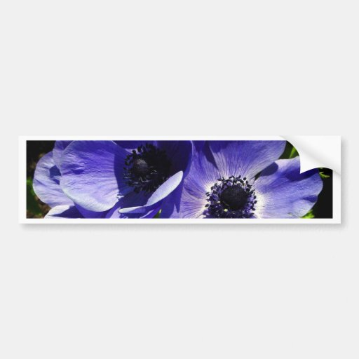 Two Blue Mauve Anemone - Close Up Windflowers Bumper Stickers