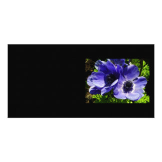 Two Blue Mauve Anemone - Close Up Windflowers Card