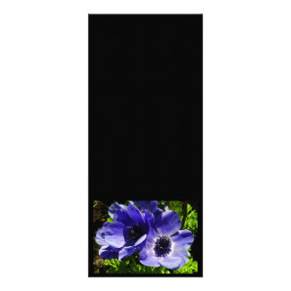 Two Blue Mauve Anemone - Close Up Windflowers Announcements