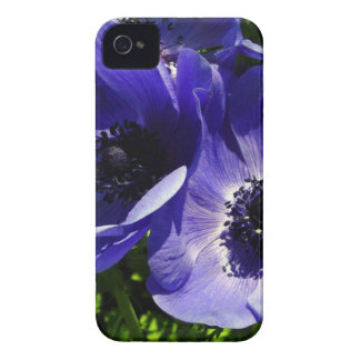 Two Blue Mauve Anemone - Close Up Windflowers iPhone 4 Cover
