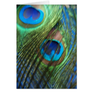 Two Blue Peacock Feathers Card