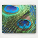 Two Blue Peacock Feathers Mousepad