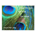 Two Blue Peacock Feathers Save the Date Postcards