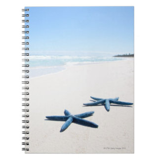 Two blue starfish at water's edge on tropical 2 notebook