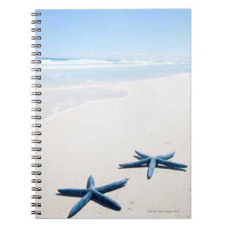 Two blue starfish at water's edge on tropical notebook