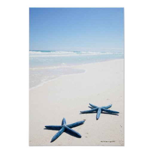 Two blue starfish at water's edge on tropical posters