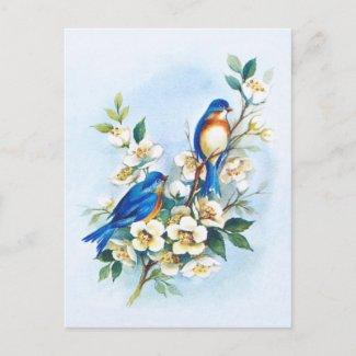 Two Bluebirds
