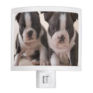 Two Boston Terrier Puppies Night Light