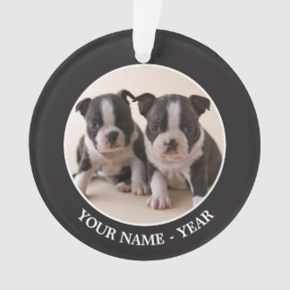 Two Boston Terrier Puppies Ornament