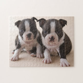 Two Boston Terrier Puppies Puzzle
