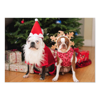 Two boston terriers in Christmas costumes Card