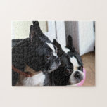 """Two Boston terriers Jigsaw Puzzle<br><div class=""""desc"""">Two Boston terriers relaxing in the sun</div>"""