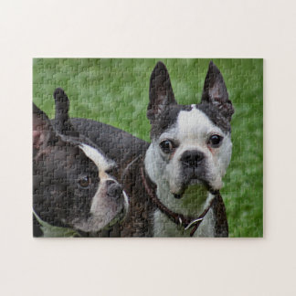 Two Boston terriers Jigsaw Puzzle