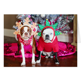 Two BostonTerriers Card