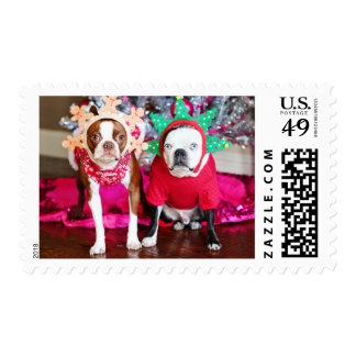 Two BostonTerriers Postage