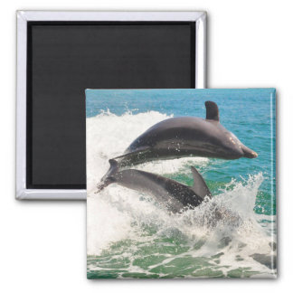 Two Bottlenose Dolphins Jumping Together Magnet