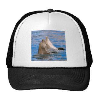 Two bottlenose dolphins trucker hat