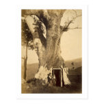 Two boys at the doorway of their treehouse, c.1870 postcards