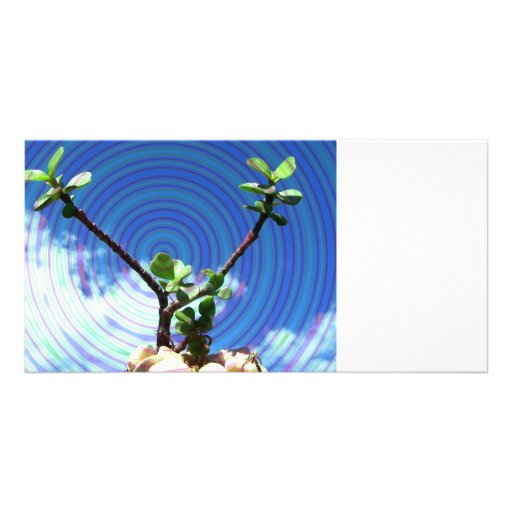 Two branches plant with spiral.jpg personalized photo card
