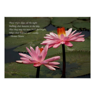 Two Bright Pink Water Lilies Poster