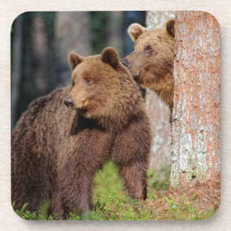 Two brown bears drink coaster