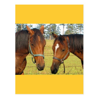 Two Brown Horses In A Field, Thoughtful Horses Postcard
