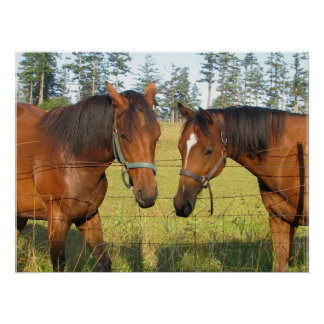 Two Brown Horses in Deep Horse Thought Poster