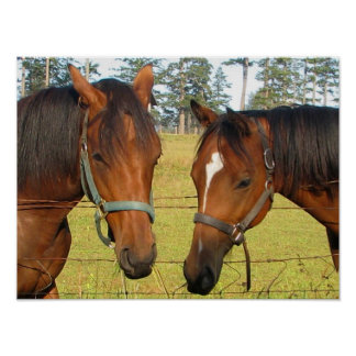 Two Brown Horses In Deep Horse Thought Posters