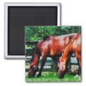 Two Brown Horses magnet