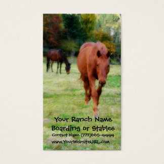 Two Brown Horses on Pasture Business Card