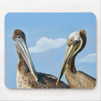 Two Brown Pelicans Mousepad