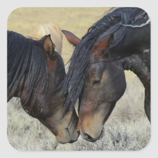 Two Brown Wild Horses Mustangs Nuzzling Square Sticker