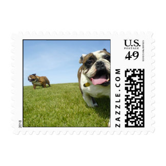Two bulldogs at the park postage